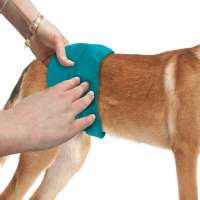 Simple Solution Pañal Masculino Lavable para Perros Small Aqua 0010279905470 opiniones