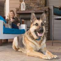 PetSafe Smart Dog Adiestramiento
