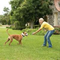 PetSafe Limitador de zona sin cable Stay+Play Wireless Fence  15-71 cm