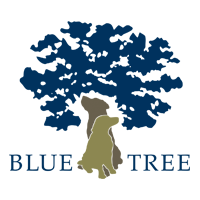 Large selection of BLUE TREE