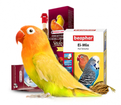 All for your Birds buy online