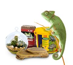 Nourriture pour reptiles et accessoires pour terrariums pour Boutique de Terrariophilie achetez en ligne à des prix intéressants