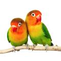 Vogelsitzstangen
