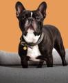 Hundebedarf & Zubehör kaufen