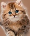 Katzenbedarf & Zubehör billig bestellen