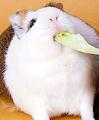Nagerbedarf für Ihre Kleintiere erwerben