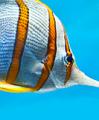 Hochwertige Aquaristikbedarf im Angebot