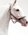 Pferdeartikel und Ausrüstung online kaufen