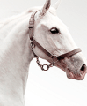 products and accessories for horses at low prices