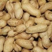 Versele Laga Peanuts 11.3 kg