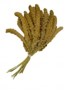 Chinese Yellow foxtail millet, handpicked 15 kg