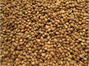 Classic Bird Canabis seeds EU-goods, only as animal feed 25 kg