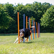 Dog Activity Agility Slalom