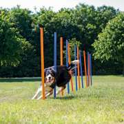 Trixie Dog Activity Agility Slalom . Kjøp her!