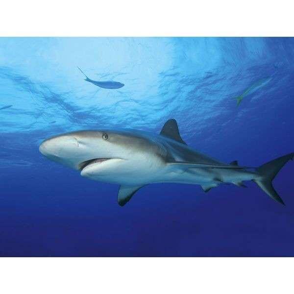 Tetra DecoArt Poster Shark&Coral  Shark&Coral