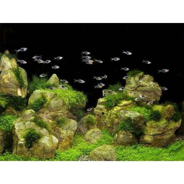 Tetra DecoArt Poster Rocks&Plants  4004218201217