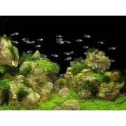 DecoArt Poster Rocks&Plants 450x600 mm
