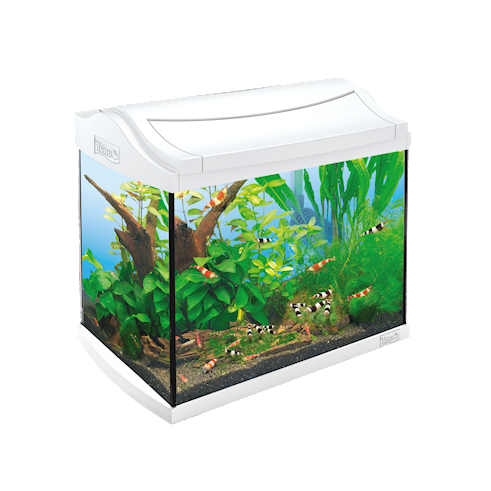 Tetra AquaArt Aquarium Complete Set Shrimps  20 l Wit
