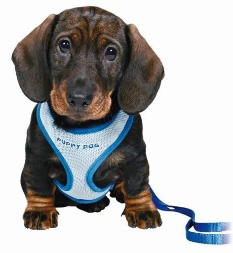 Trixie Puppy Softtuig met Riem  Blauw 26-34/1 cm