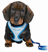 Dog Harnesses Trixie Puppy Soft Harness with Leash Blue
