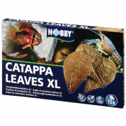 Aquaristik Dohse Catappa Leaves XL, 12 pezzi