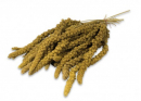 Spray Millet yellow 1 kg