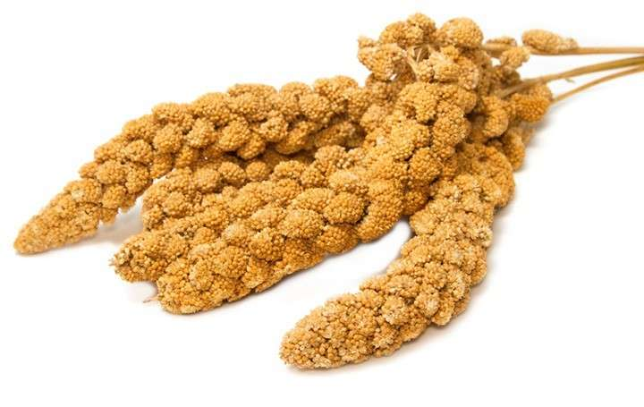 French Yellow, Mohar by Moreau 15 kg buy online