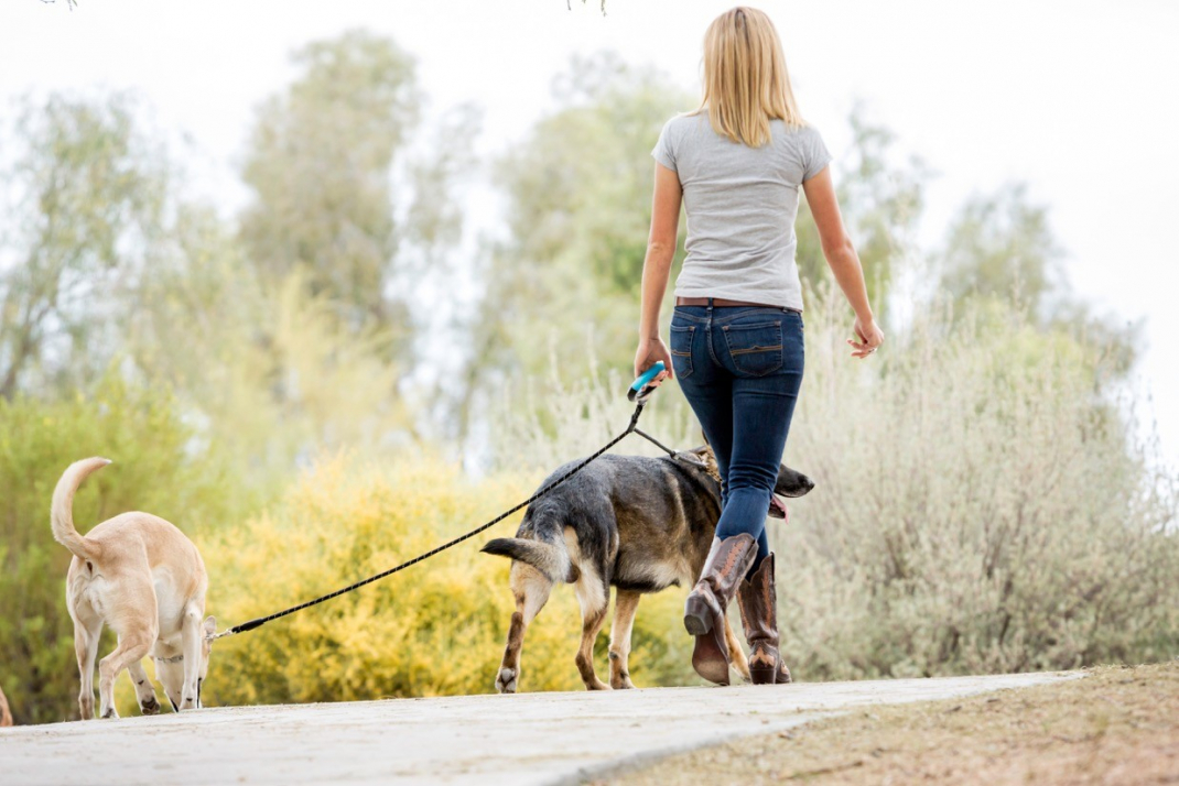 Wigzi Standard Dual Doggie Black Leash 1.37m