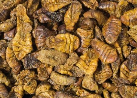 JR Farm Silk Worms 40 g