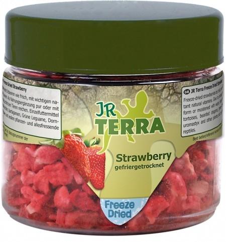 Terra Freeze Dried Strawberry Erdbeere 10 g  von JR Farm online günstig kaufen
