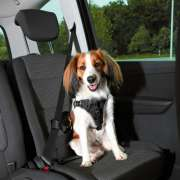 Dog Protect Car Harness, black S-M