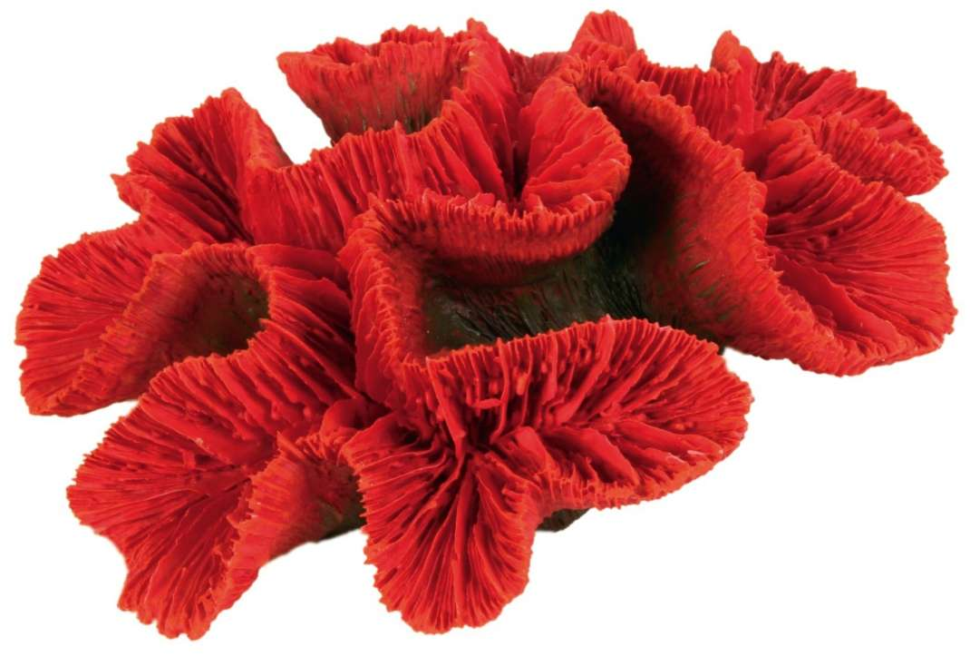 Trixie Flowerkoraal  4011905088099