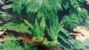 Terrarium Rear Wall, Tree Bark/Rainforest - EAN: 4011905763217