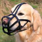Trixie Muzzle, Bridle Leather