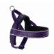 Hunter Norwegian harness Racing, Violet/Black EAN: 4016739609663 reviews
