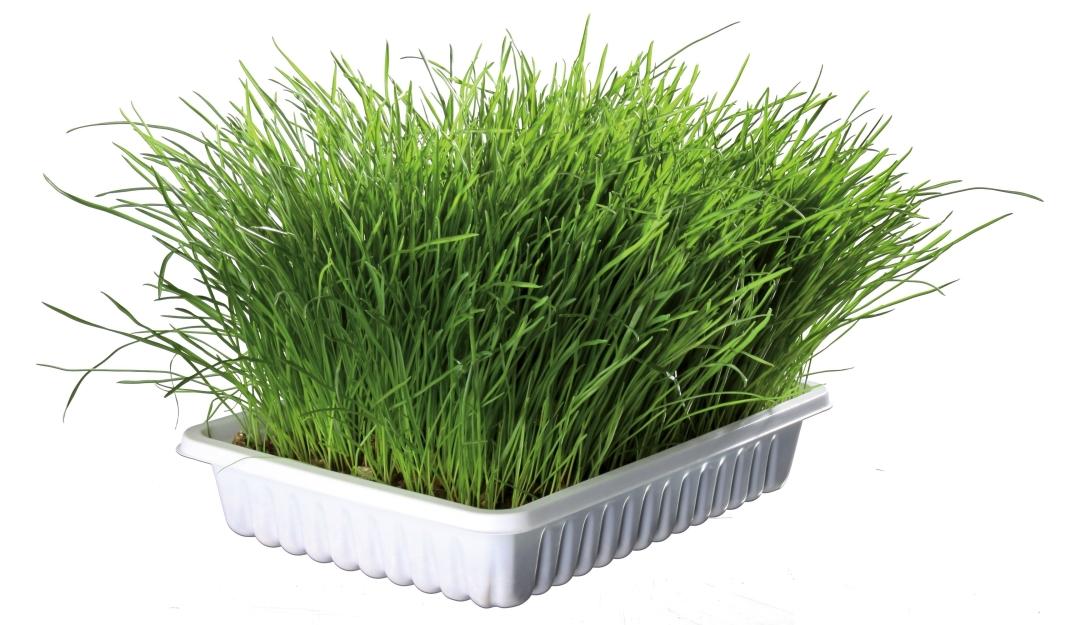 Trixie Soft Grass 100 g test