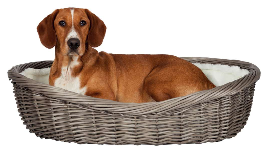 Trixie Dog Basket  50 cm Grå