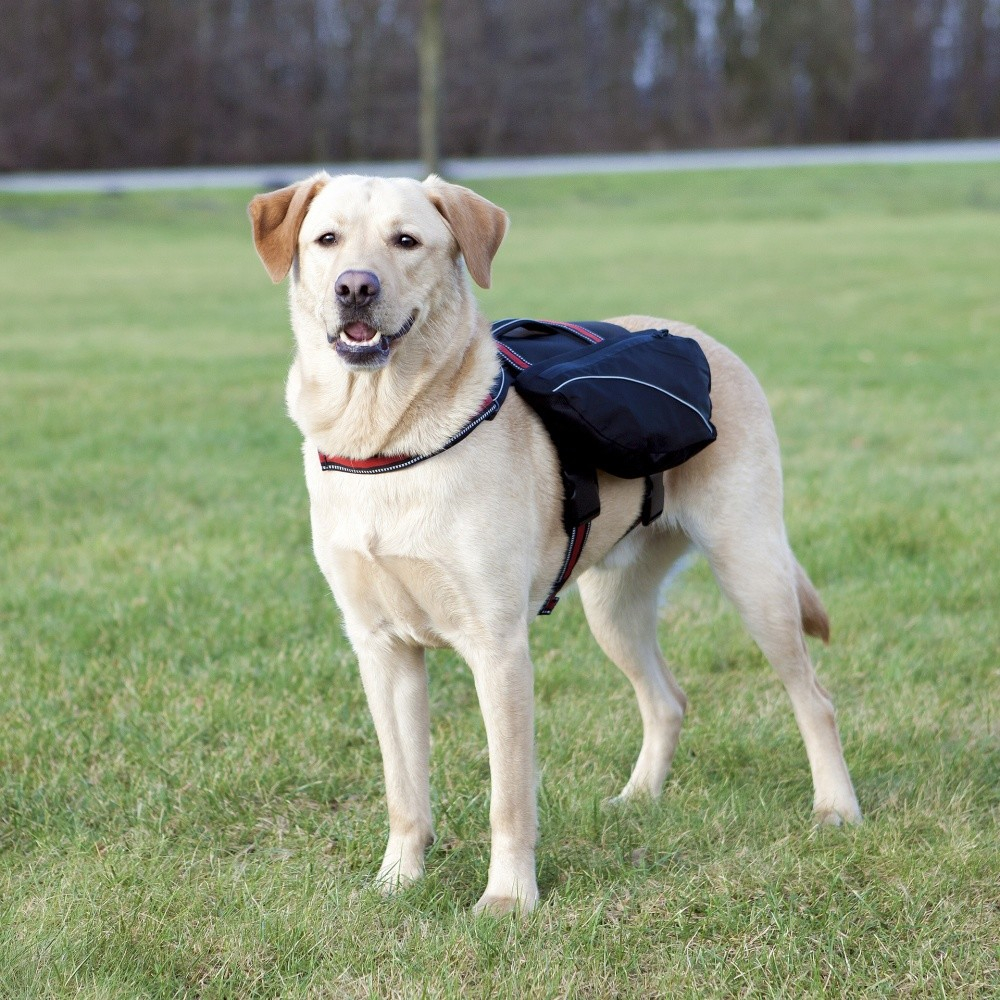 Trixie Backpack for Dogs Black 31x17 cm
