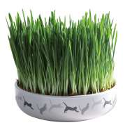 Trixie Ceramic Bowl with Cat Grass 15x4 cm