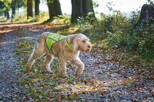 Hunter Veiligheidsjasje voor honden, L  S Neon groen