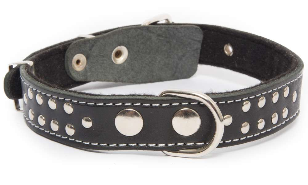 Leather Collars Collar with textile back and rivets Black, Dark brown, Light orange by Bark&Bones Buy fair and favorable with a discount