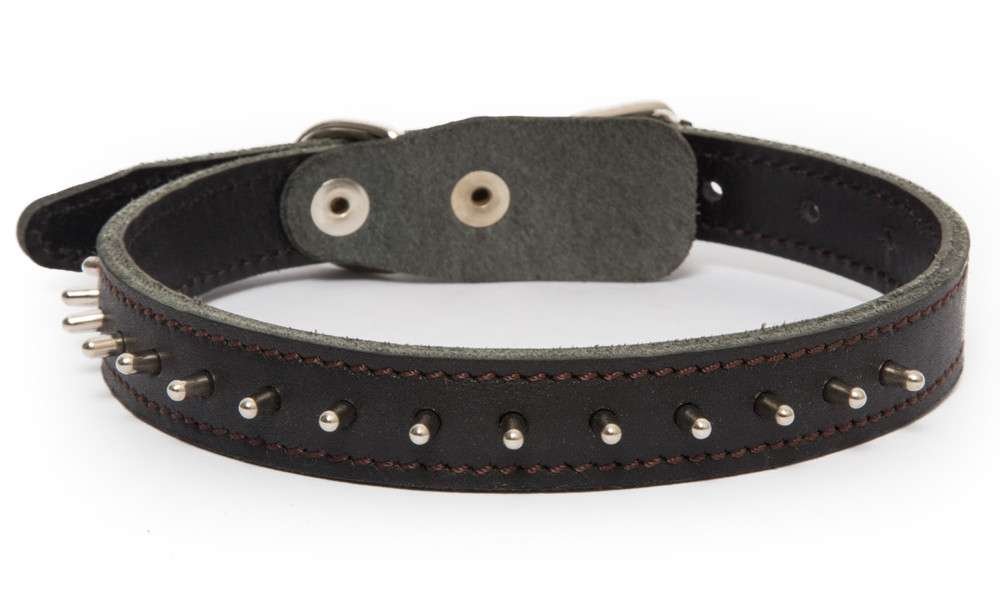 Leather Collars Collar with spikes Black, Dark brown, Light orange by Bark&Bones Buy fair and favorable with a discount