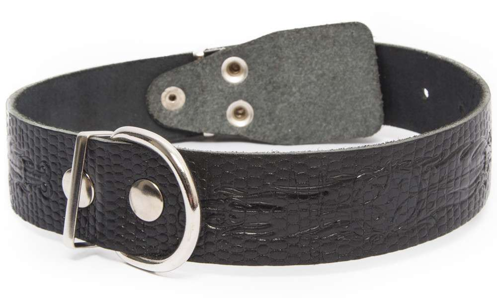 Collar with printed reptile pattern and the buckle inside, L Black L from Bark&Bones
