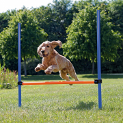 Trixie Agility Hurdle 123x115 cm buy online - Agility supplies and sport equipment for dogs