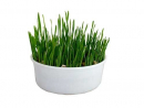 Rosenlöcher Cat Grass 150 g