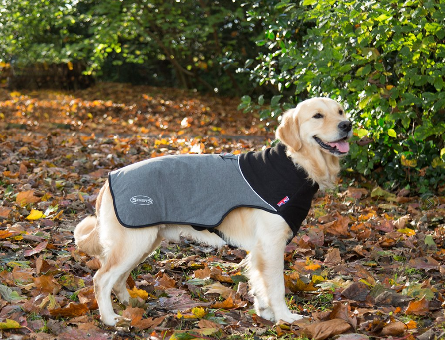 Scruffs Thermal Dog Coat  Grey L order cheap