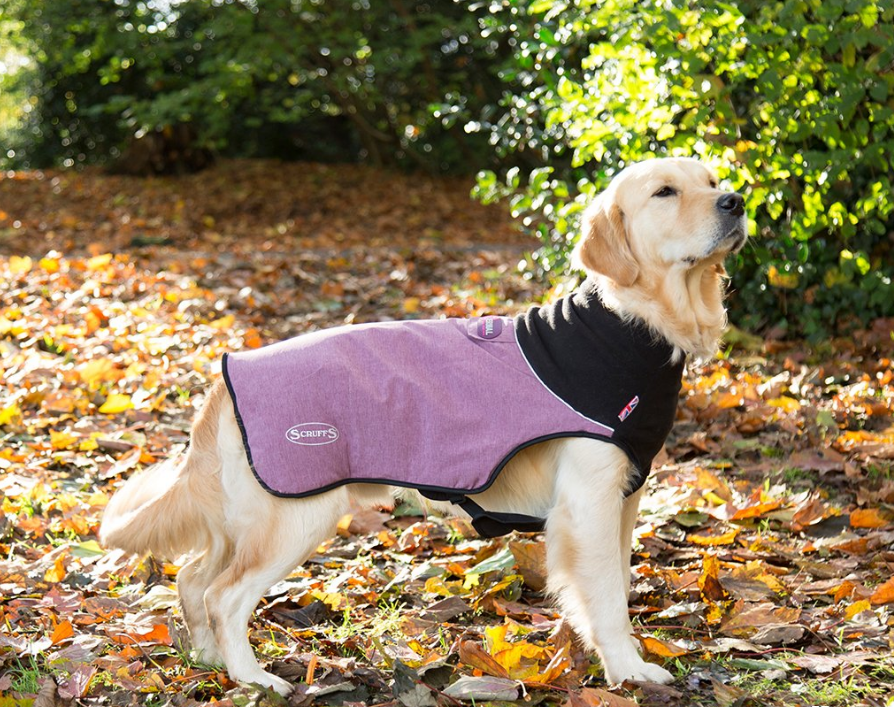 Scruffs Thermal Hundemantel  Fuchsia L