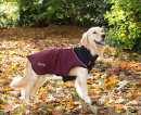 Thermal Dog Coat Wine red