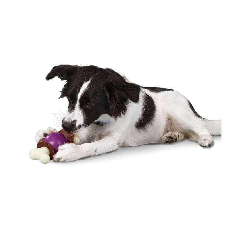 PetSafe Busy Buddy Bouncy Bone  L