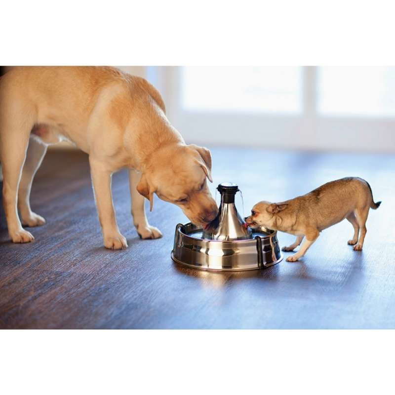 PetSafe Drinkwell 360 Stainless Steel Fountain for dogs and cats